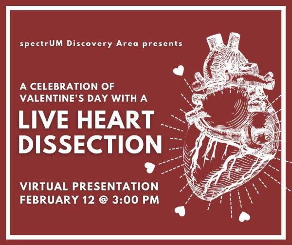 Live Heart Dissection