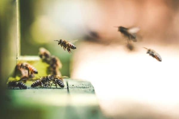 Bees, Bees, Bees!